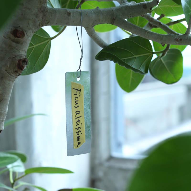 GALVANIZED PLANT MARKER RECT W38